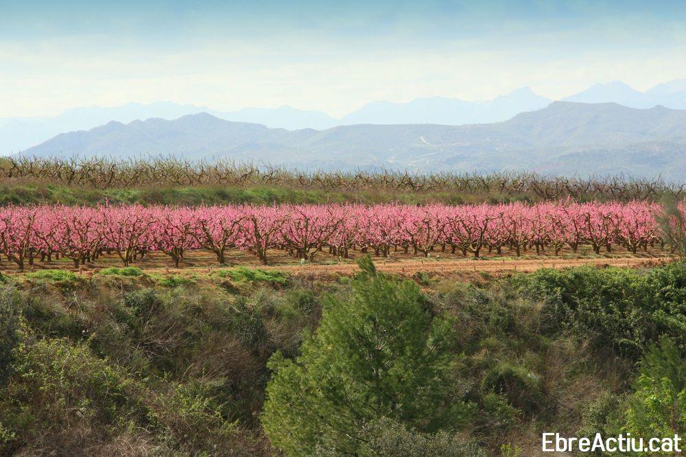 Àlbum: La Ribera en flor