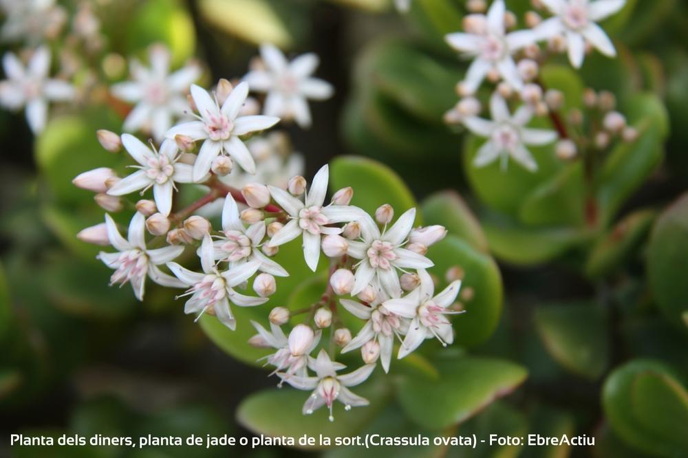 Plantes i flors
