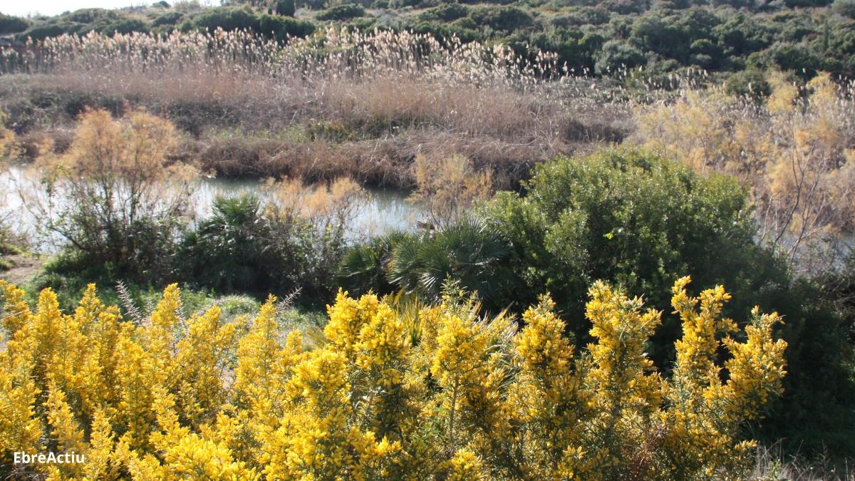 Us apropem el territori a casa: la desembocadura del riu Sénia